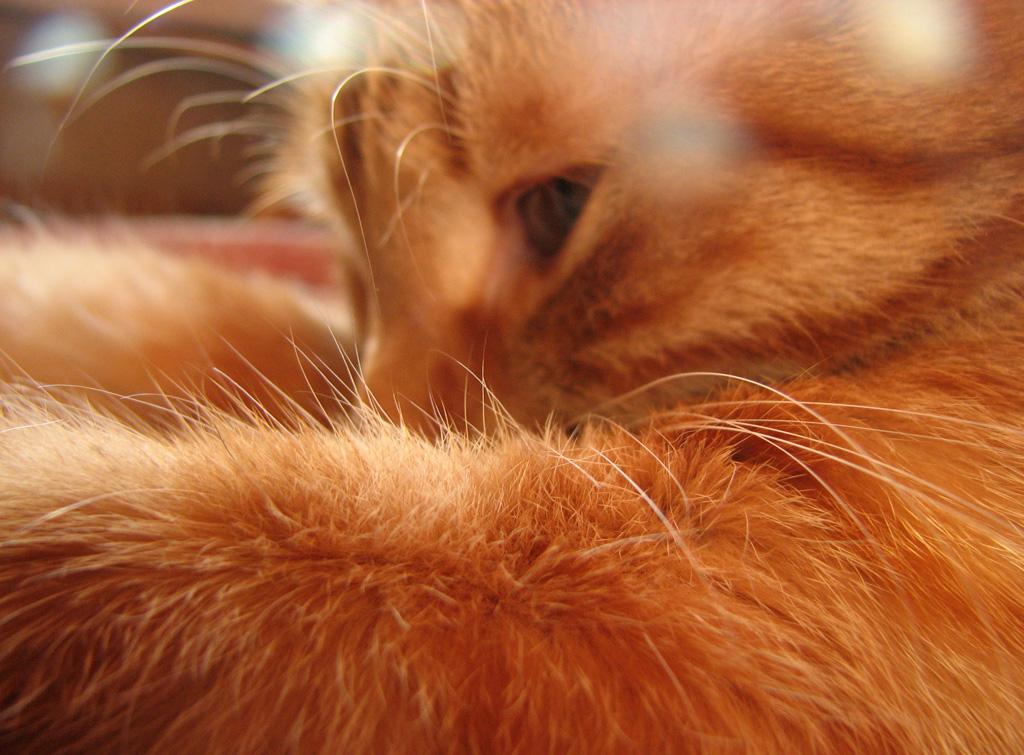картинки осень рыжая кошка