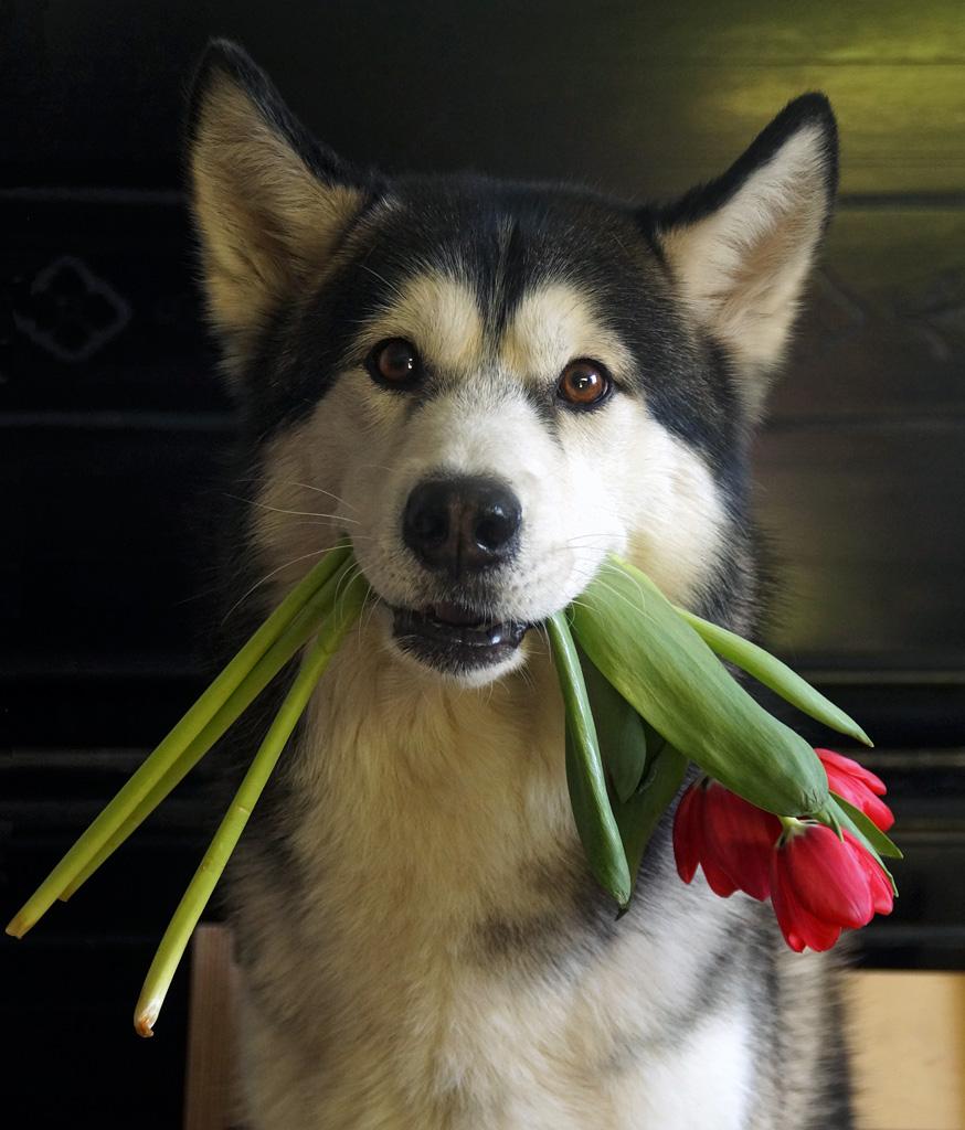 Картинки с 8 марта с собакой
